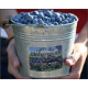Field Fresh Blueberries- 5lbs